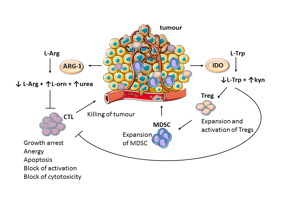 The role of tumour microenvironment in cancer immunotherapy